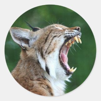 Lynx, bobcat beautiful photo sticker,  stickers