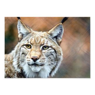 Lynx Bobcat Wildlife Predator Cat 13 Cm X 18 Cm Invitation Card