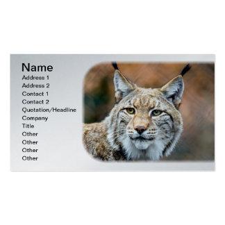 Lynx Bobcat Wildlife Predator Cat Pack Of Standard Business Cards
