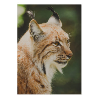 Lynx Pack Of Chubby Business Cards