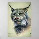 Lynx (head study) posters