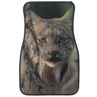 Lynx, Lynx canadensis, Denali National Park, Car Mat