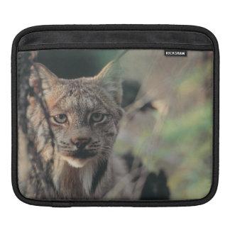 Lynx, Lynx canadensis, Denali National Park, iPad Sleeve
