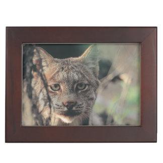 Lynx, Lynx canadensis, Denali National Park, Keepsake Box