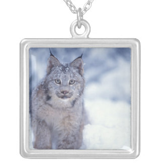 lynx, Lynx lynx, in the snow in the foothills of Silver Plated Necklace