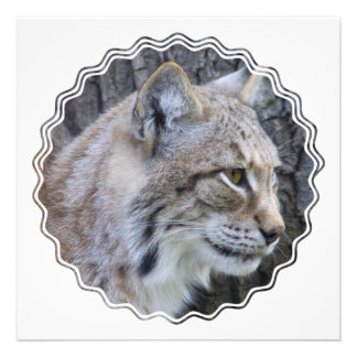 Lynx Photo Invitation