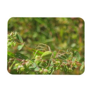 Lynx Spider Rectangle Magnet