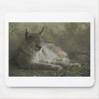 Lynx wild animal from north america mousepad