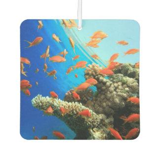 Lyretail anthias on coral reef car air freshener