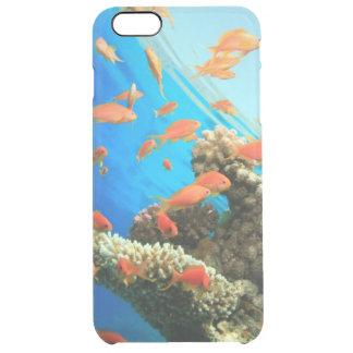 Lyretail anthias on coral reef clear iPhone 6 plus case