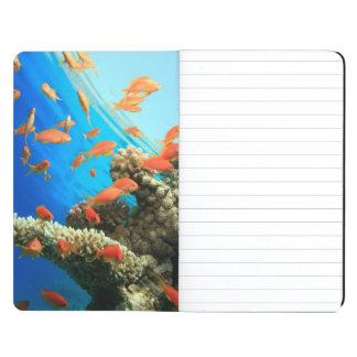 Lyretail anthias on coral reef journals