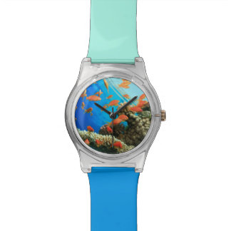 Lyretail anthias on coral reef wristwatch