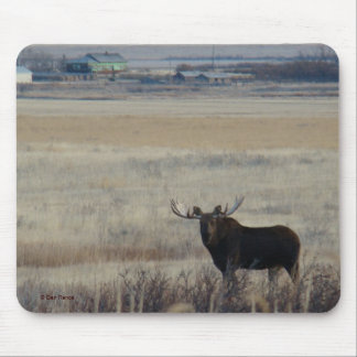 M0003 Bull Moose by Farm mouse pad