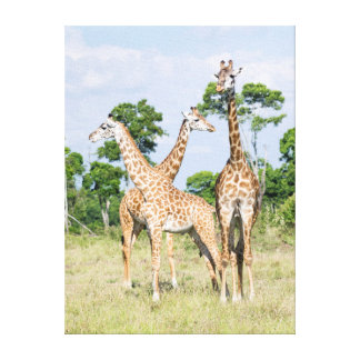 Maasai Giraffe Canvas Print