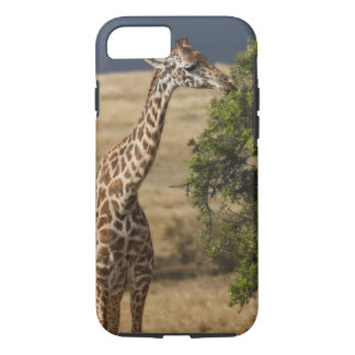 Maasai Giraffe (Giraffe Tippelskirchi) as seen 2 iPhone 8/7 Case
