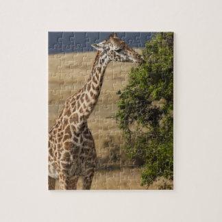 Maasai Giraffe (Giraffe Tippelskirchi) as seen 2 Jigsaw Puzzle
