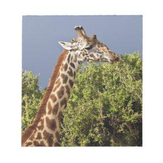Maasai Giraffe (Giraffe Tippelskirchi) as seen 3 Notepad