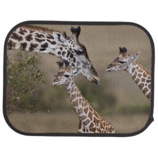 Maasai Giraffe (Giraffe Tippelskirchi) as seen Car Mat