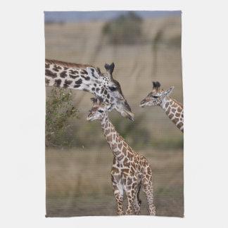 Maasai Giraffe (Giraffe Tippelskirchi) as seen Hand Towels