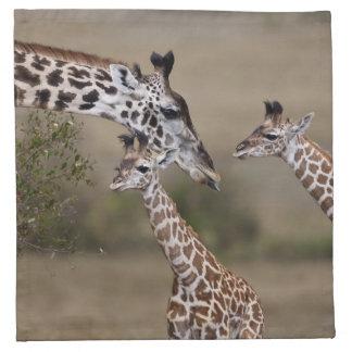 Maasai Giraffe (Giraffe Tippelskirchi) as seen Napkin