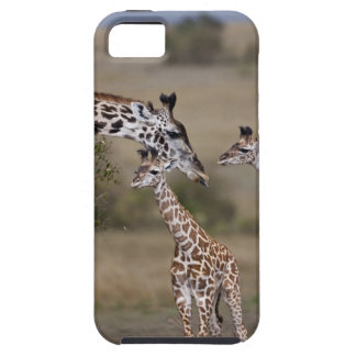 Maasai Giraffe (Giraffe Tippelskirchi) as seen Tough iPhone 5 Case