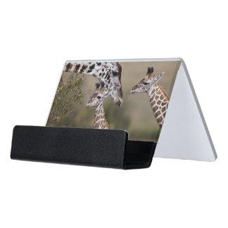 Maasai Giraffe (Giraffe Tippelskirchi) Desk Business Card Holder