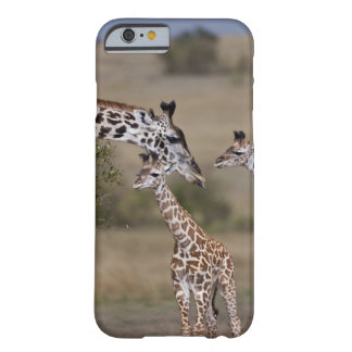 Maasai Giraffe (Giraffe Tippelskirchi) wie gesehen Barely There iPhone 6 Case