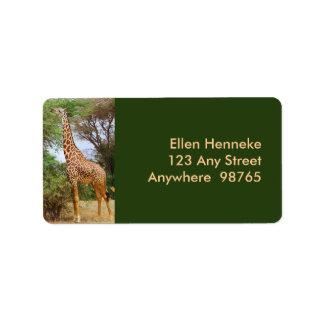 Maasai Giraffe Label