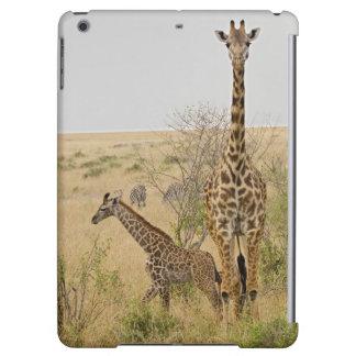 Maasai Giraffes roaming across the Maasai Mara