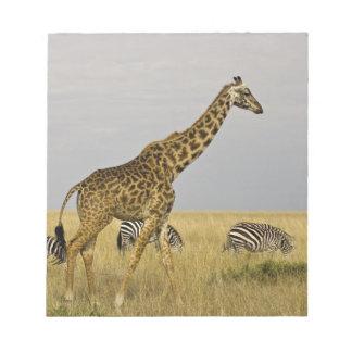 Maasai Giraffes roaming across the Maasai Mara 3 Notepad