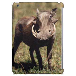 Maasai Mara National Reserve, Desert Warthog