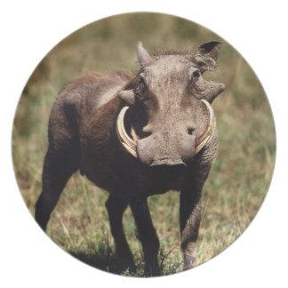 Maasai Mara National Reserve, Desert Warthog Plate