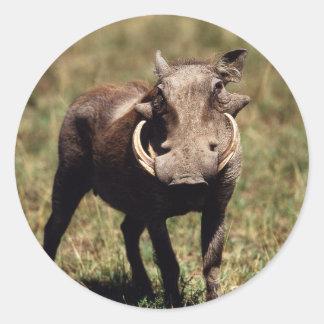 Maasai Mara National Reserve, Desert Warthog Round Sticker