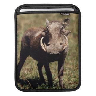 Maasai Mara National Reserve, Desert Warthog Sleeves For iPads