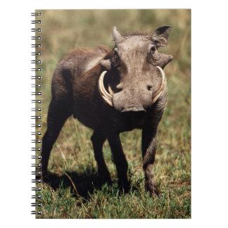 Maasai Mara National Reserve, Desert Warthog Spiral Notebook