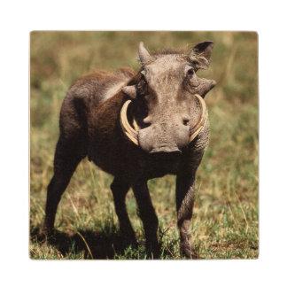 Maasai Mara National Reserve, Desert Warthog Wood Coaster
