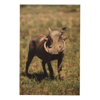 Maasai Mara National Reserve, Desert Warthog Wood Print