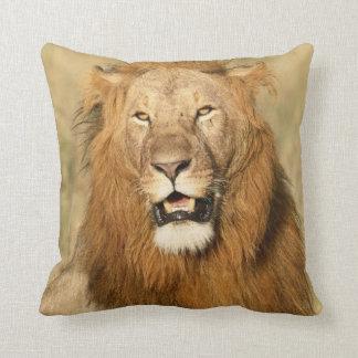 Maasai Mara National Reserve, Male Lion Cushion