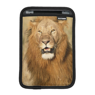 Maasai Mara National Reserve, Male Lion iPad Mini Sleeve