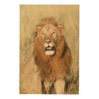 Maasai Mara National Reserve, Male Lion Wood Wall Art