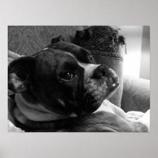 Mabel: Boxer Dog Poster