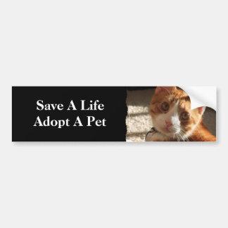Mac Cat Photo Animal Adoption Bumper Sticker