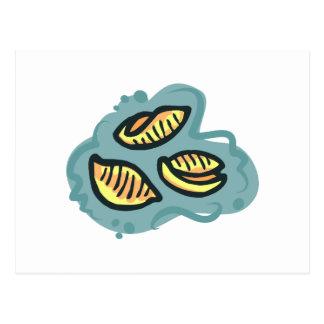mac shells n cheese post cards
