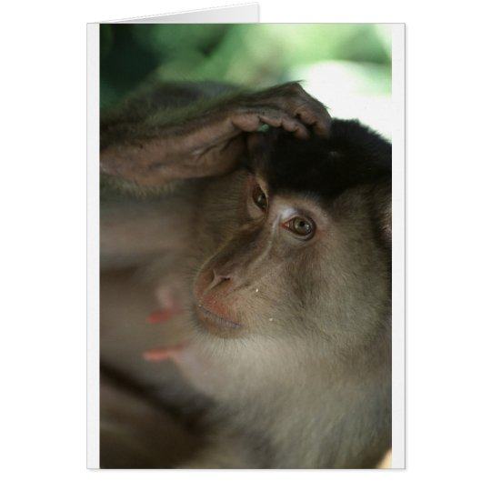 Macaque Monkey Borneo Card