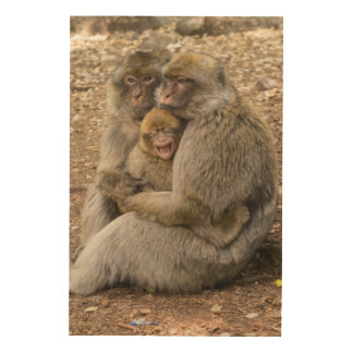 Macaque Monkeys and Baby Wood Wall Art