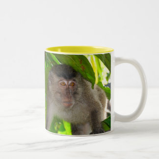 Macaque Monkeys mug