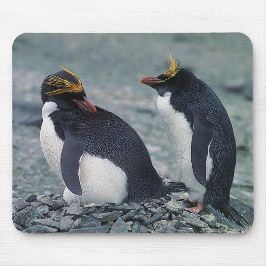 Macaroni penguins mouse pad