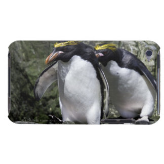 Macaroni Penguins, South Georgia Barely There iPod Cover