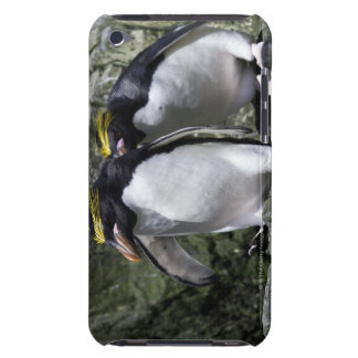 Macaroni Penguins, South Georgia iPod Touch Cover