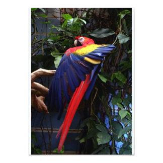 Macaw 13 Cm X 18 Cm Invitation Card